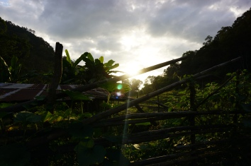 Even more jungle