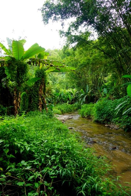 Jungle everywhere