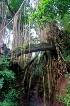 Impressive trees all around