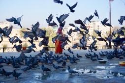 Pigeons everywhere