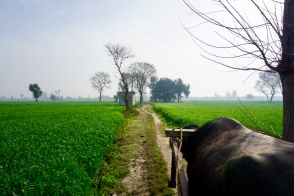 Farm life in its purest