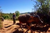 Bulls and Cows along the way